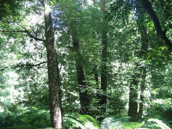 East Gippsland Rainforest & Victorian Rainforest Network